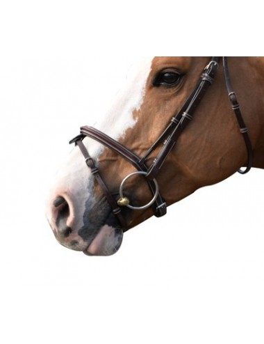 Tuesday Noseband