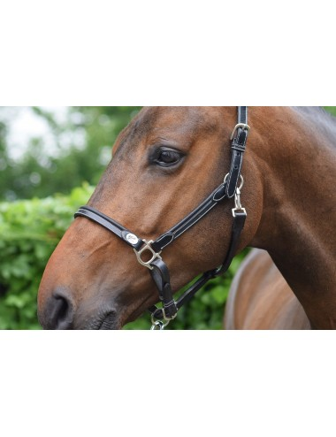 Grooming halter - Week Collection