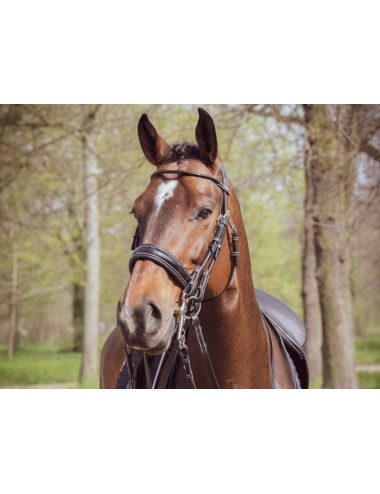 Courchevel Bridle - One Collection