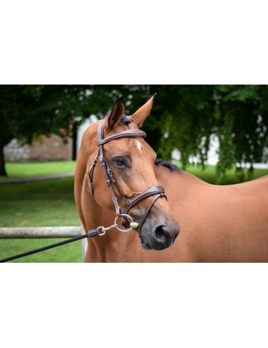 Brussels Bridle - One Collection