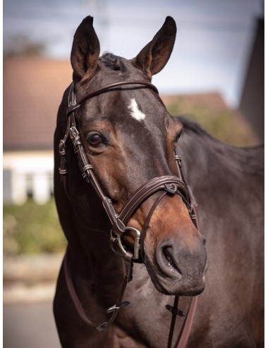 Friday Bridle - Week Collection