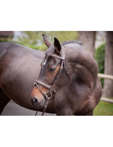 Crystal Bridle - Week Collection