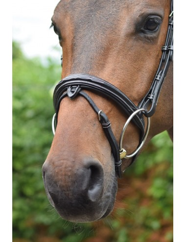 Wednesday Noseband