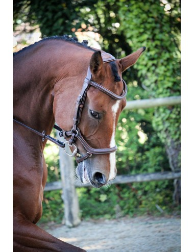 New York Bridle - One Collection